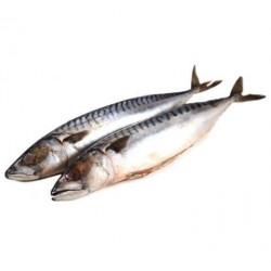 Makrela kuchaná na gril...